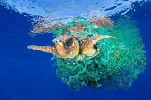 Turtle covered in plastic